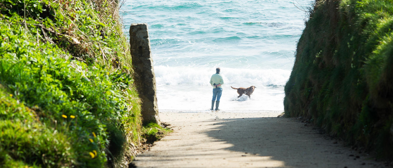 Meudon hotel beach pathway bream cove 3000x1288