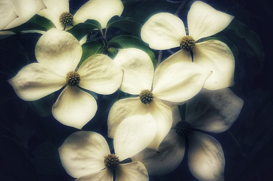 Blogflower teaser