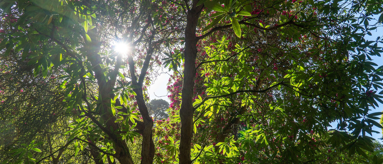 Meudon hotel gardens trees 3000x1288 1